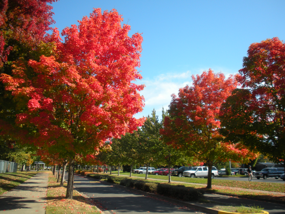 Grants Pass Fall Colors