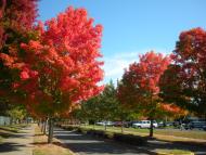 Grants Pass Fall Colors